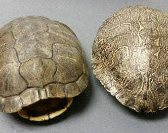 the big turtle shell review
