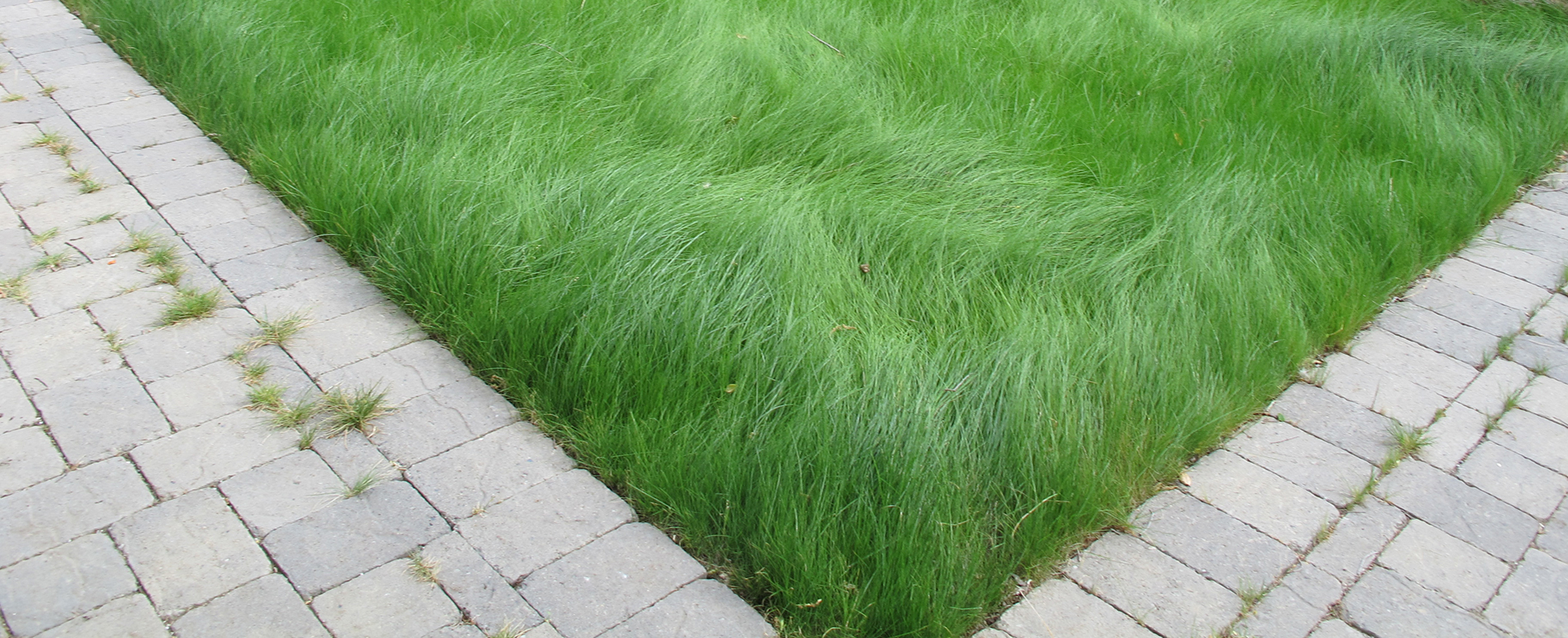 low maintenance grass seed reviews