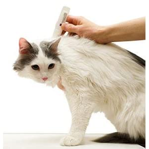 sentry fiproguard plus for cats reviews