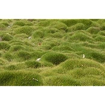 scotts zoysia grass seed reviews