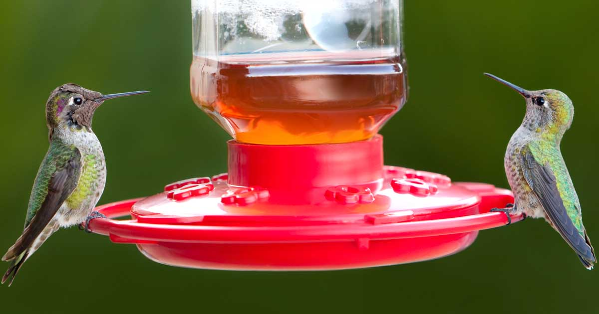 hummingbird feeder reviews buzz for the best