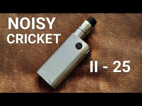 noisy cricket ii 25 review