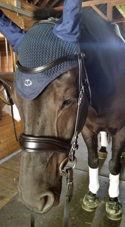 ps of sweden bridle review