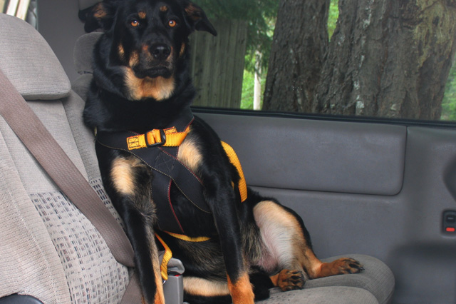 ruff rider dog harness reviews