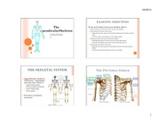 the appendicular skeleton review sheet