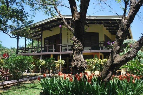 the gilded iguana nosara reviews