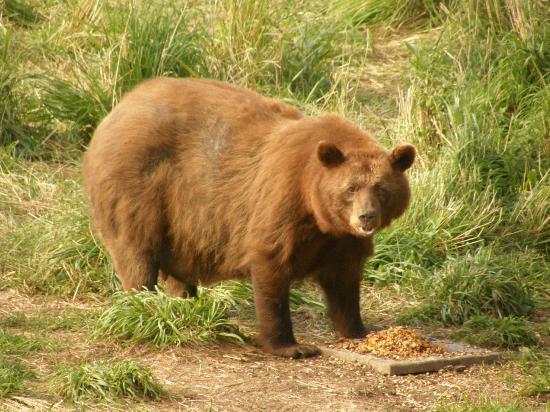 vince shute wildlife sanctuary review